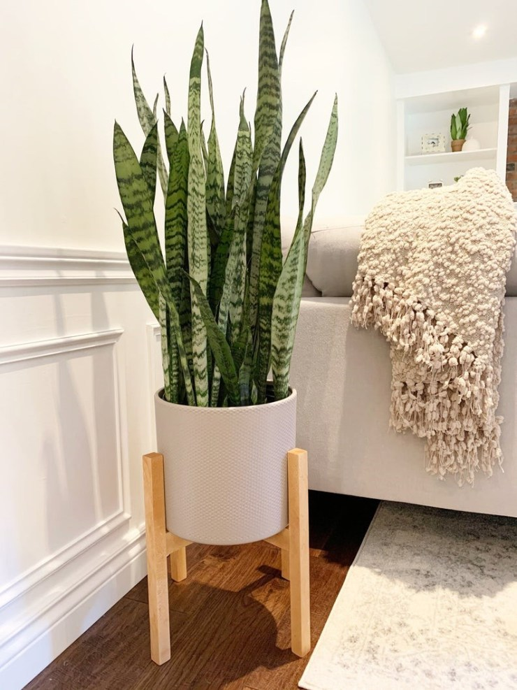 indoor /outdoor mid-century modern style plant pot stand.
