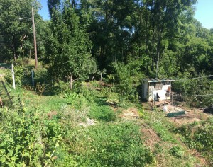 An example of a novel ecosystem with forest garden polycultures and a diversity of plants and flowers
