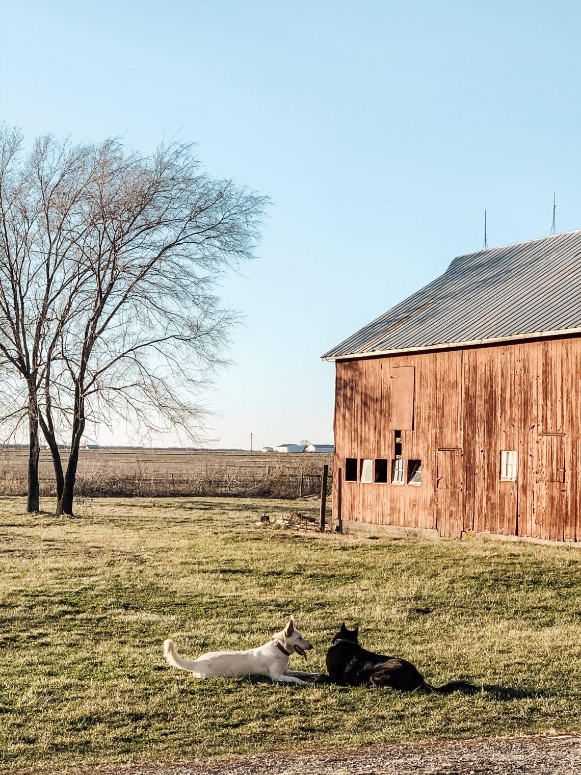 This Week at the Farm: 1