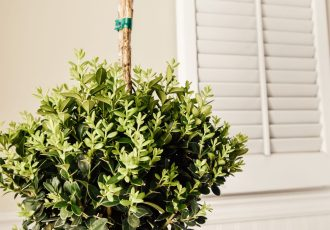 Indoor Boxwood Topiary