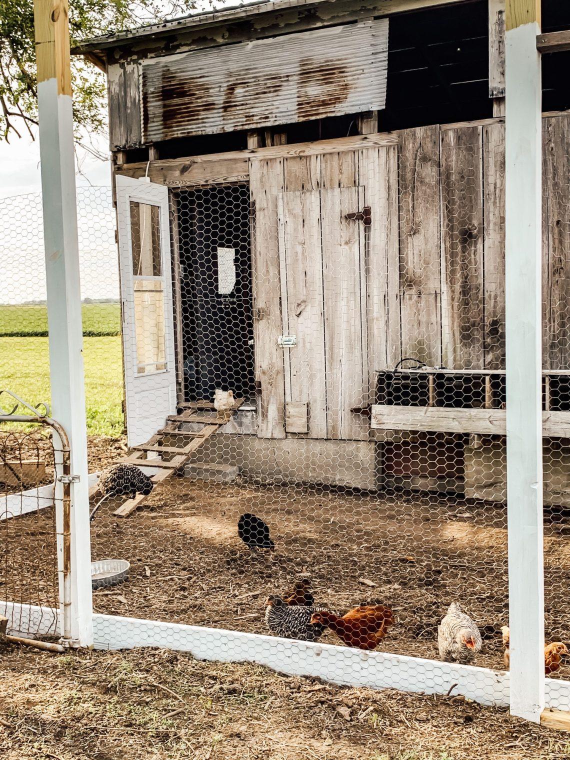 Chicken Coop Progress Update 2