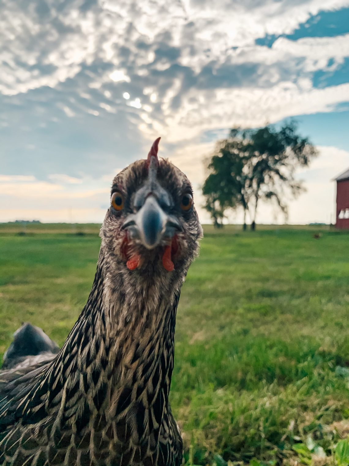 Weekly Farm Update: A Weird Week