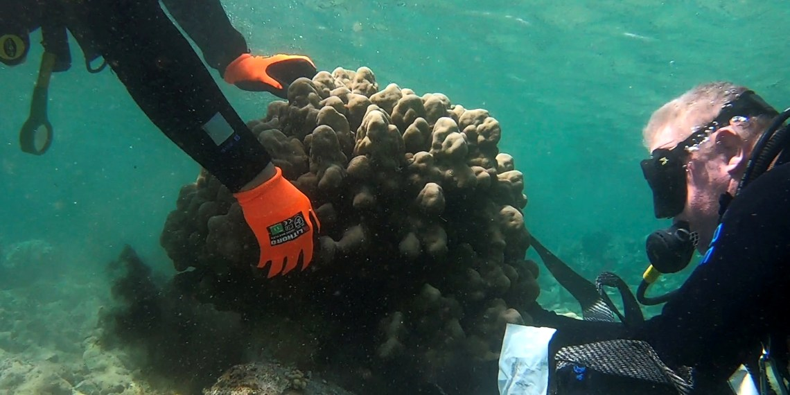 A still image taken from underwater video footage shows divers from Israel Nature and Parks Authority removing coral from an object which is part of industrial debris left by Eilat Ashkelon Pipeline Company (EAPC) after it scaled back its operations, in the Red Sea, near Katza beach in Eilat, Israel March 6, 2019. Picture taken March 6, 2019. Courtesy Omri Omessi/Israel Nature and Parks Authority/Handout via REUTERS