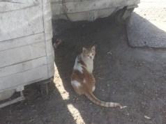 Random kitty 2