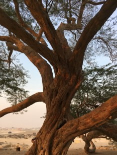Close up - Tree of Life