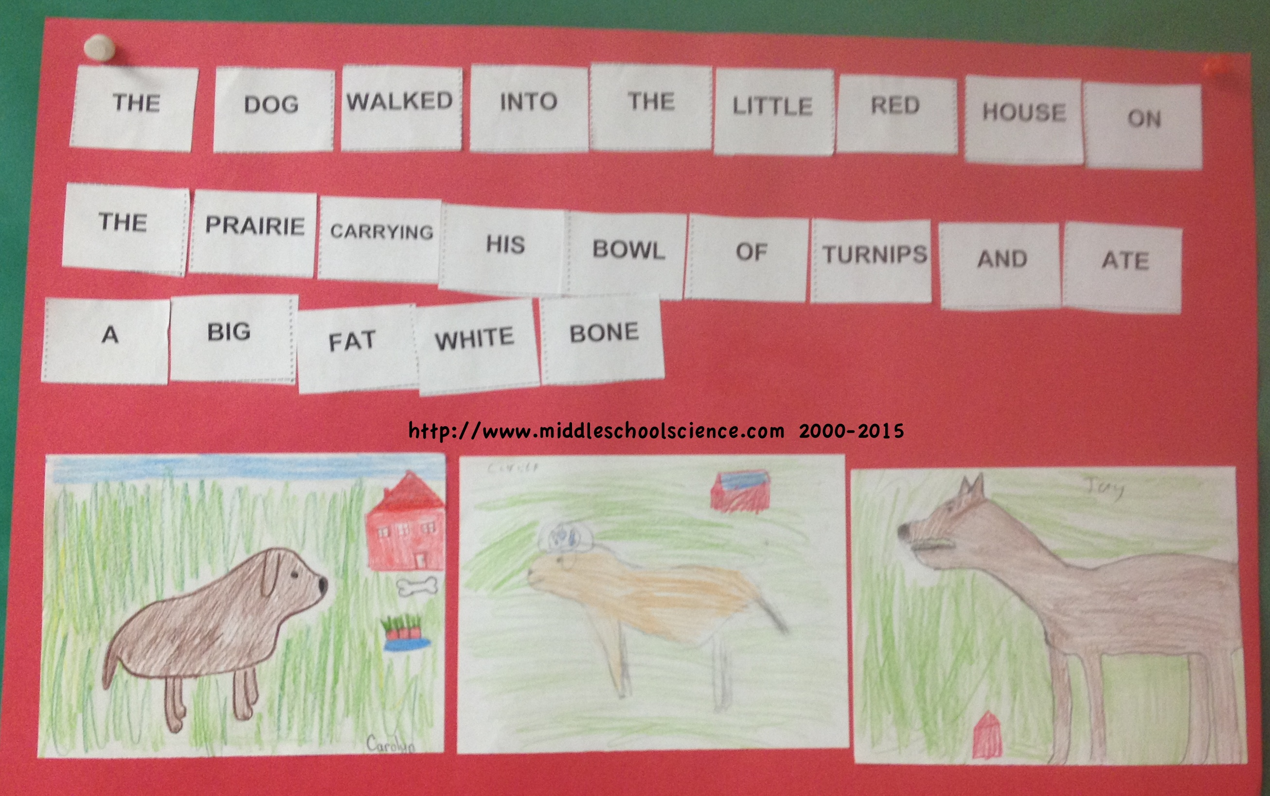 Dogs And Turnips D Amp T Activity Middle School Science Blog