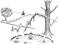 The Goat by the Water : Observation vs Inference ...