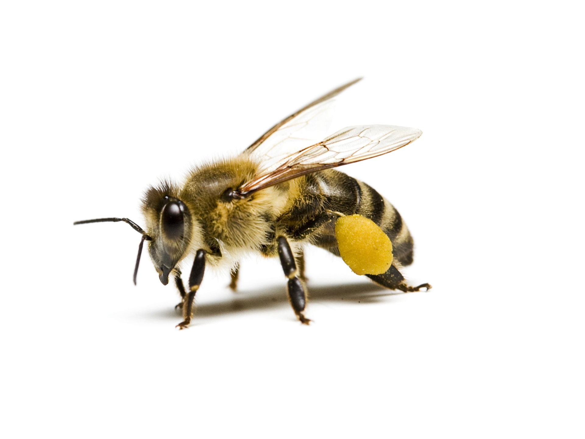 bee removals middlesex county