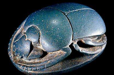 Hallan un scarabée muy singular