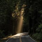 森の中の道路に木漏れ日が差し込んでいる