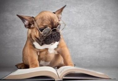 cachorro inteligente - Quem é mais esperto o cachorro ou o rabo?