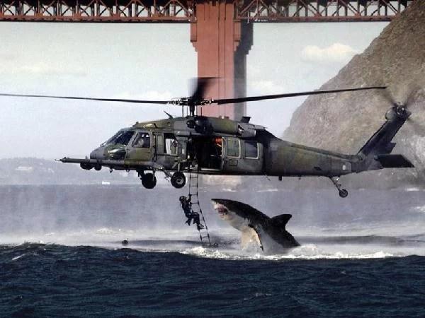 shark helicopter fake picture - Foto do Ano' de tubarão e helicóptero era um simples trote de e-mail
