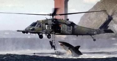 """shark helicopter fake picture - Homem que nunca """"cortou"""" o cabelo"""