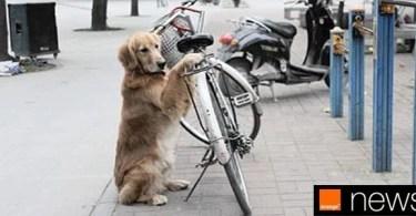 cachorro guarda