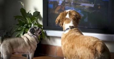 dog tv - Publicidade volta a utilizar animais como protagonistas em campanhas comerciais