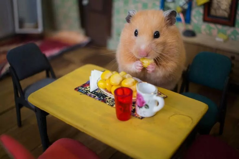 """Crafted miniature town for HUNGRY HUNGRY HAMSTERS online series 5935d40f144a4  880 - Genial! Artistas criam uma """"mini cidade"""" para Hamsters"""
