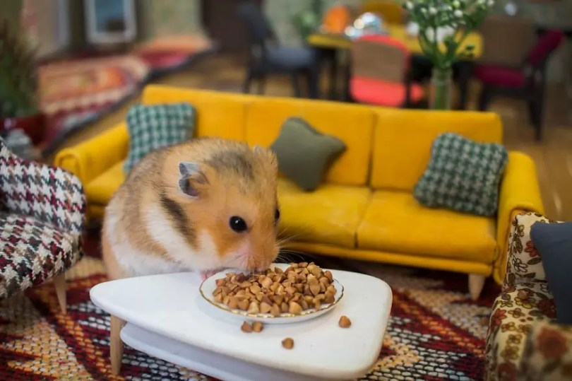 """Crafted miniature town for HUNGRY HUNGRY HAMSTERS online series 5935d4a2557f9  880 - Genial! Artistas criam uma """"mini cidade"""" para Hamsters"""