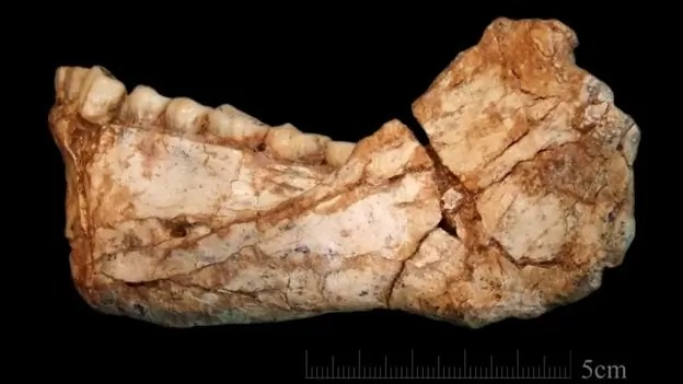 """Fotos, Curiosidades, Comunicação, Jornalismo, Marketing, Propaganda, Mídia Interessante descoberta-homo-sapiens2 BBC: Descoberto mais antigos fósseis de """"homo sapiens"""" de 300 mil anos Cotidiano Curiosidades  BBC: Descoberto mais antigos fósseis de"""