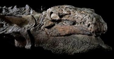 """dinosaur nodosaur fossil discovery 1 - Relembre a música """"Love In Brasil"""" de Andreea Banica mostrando seu amor pelo Brasil"""