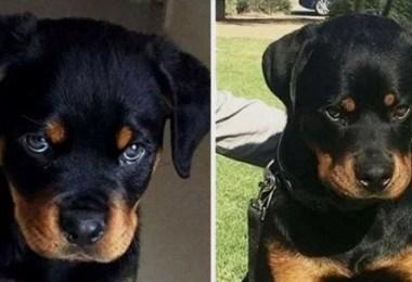 foto cao - Fotos de cachorros adultos quando era filhote destaca-se nas redes sociais