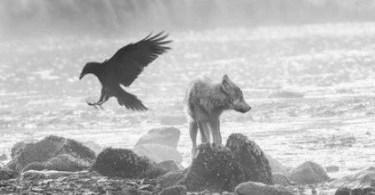 lobos do mar natureza - Há 100 anos nascia o homem mais alto do mundo de todos os tempos
