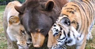 tres amigos urso leao tigre - Desenhos 3d incríveis!