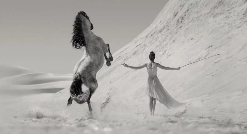 cavalos selvagens fotos profissionais 9 - Fotos lindas capturadas de cavalos selvagens