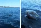 dog saves drowning baby deer storm 8 - Cachorrinho herói salva Cervo da água