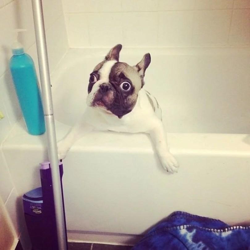 Fotos, Curiosidades, Comunicação, Jornalismo, Marketing, Propaganda, Mídia Interessante cachorros-tomando-banho-gato-pets5 Pets e a hora do banho! Cotidiano Fotos e fatos  hora do banho