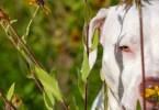 Fotos, Curiosidades, Comunicação, Jornalismo, Marketing, Propaganda, Mídia Interessante cao-abandonado-foto Fotógrafa tira fotos de cães abandonados em abrigo Cotidiano Fotos e fatos  cães abandonados