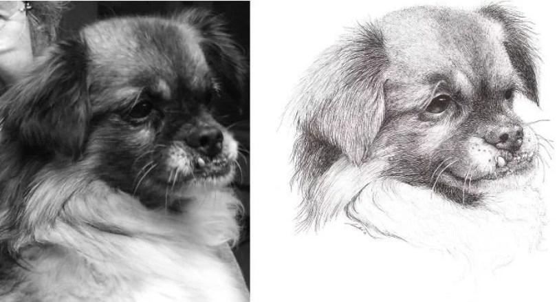 donos fizeram quadros de seus pets11 - Donos que fizeram quadros de seus pets