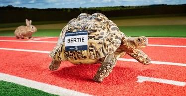 fastest tortoise header tcm25 395304 - Veja como foi filmado esta cena do Tigre em The Walking Dead