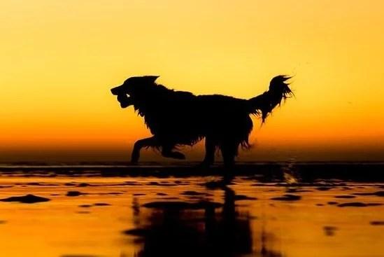 foto cachorrinho profissional - Ganhadores do concurso fotografias de cachorrinhos