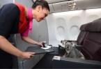 companhias aéreas que permitem animais