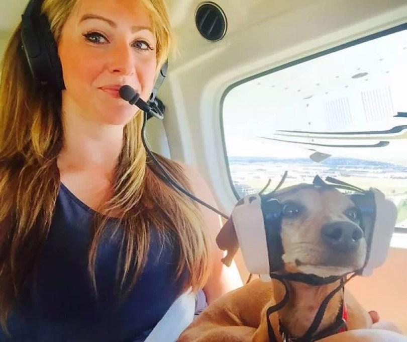 animais em voo permitido avião 22 - Afinal, é permitido animais em voos dentro do avião?