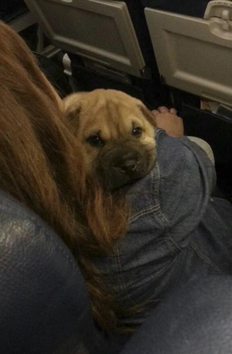 animais em voo permitido avião 27 - Afinal, é permitido animais em voos dentro do avião?