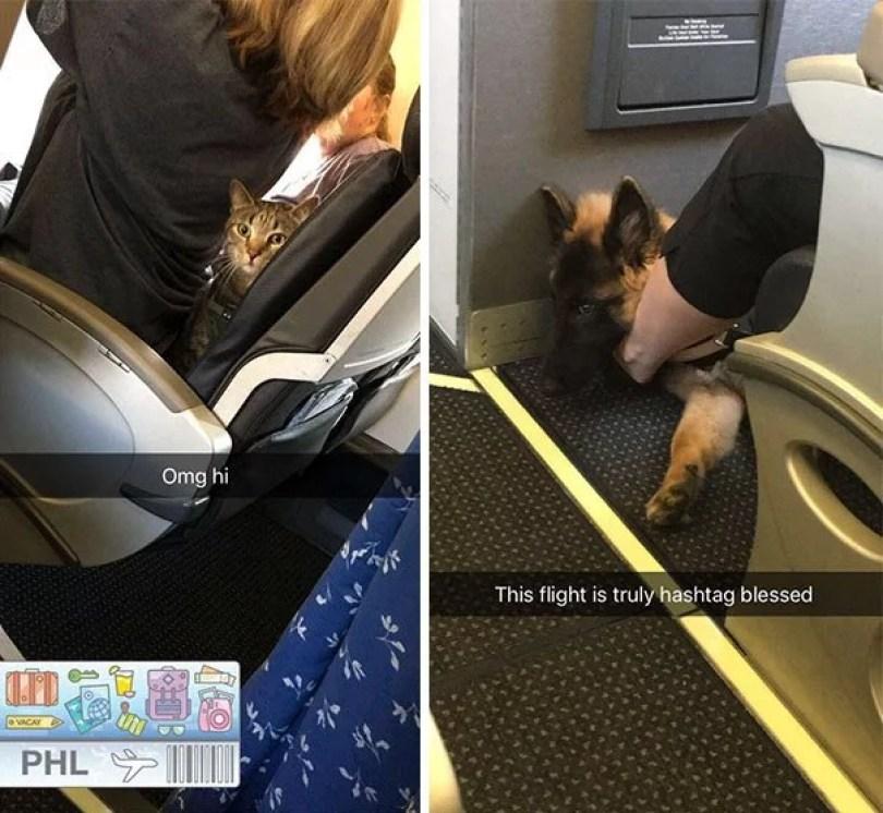 animais em voo permitido avião 31 - Afinal, é permitido animais em voos dentro do avião?
