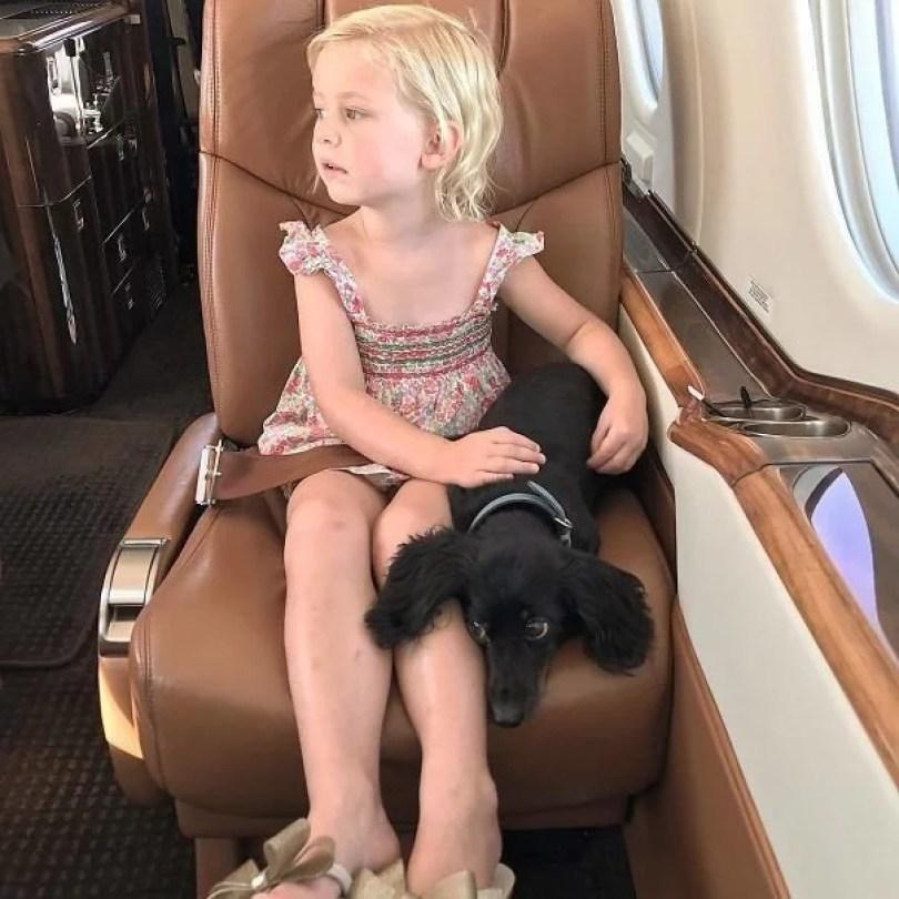 animais em voo permitido avião 41 - Afinal, é permitido animais em voos dentro do avião?