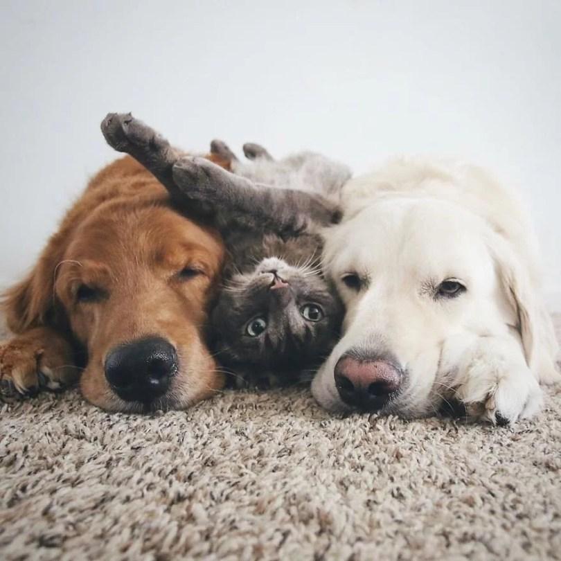 caes e gatos amigos10 - Book fotográfico de cães e gato melhores amigos
