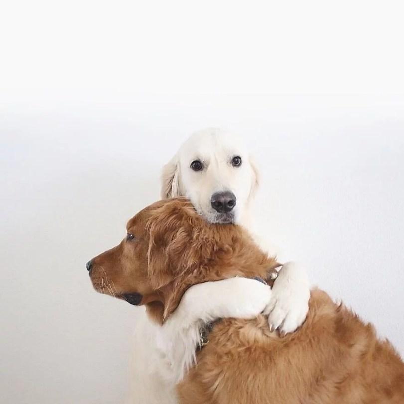 caes e gatos amigos14 - Book fotográfico de cães e gato melhores amigos