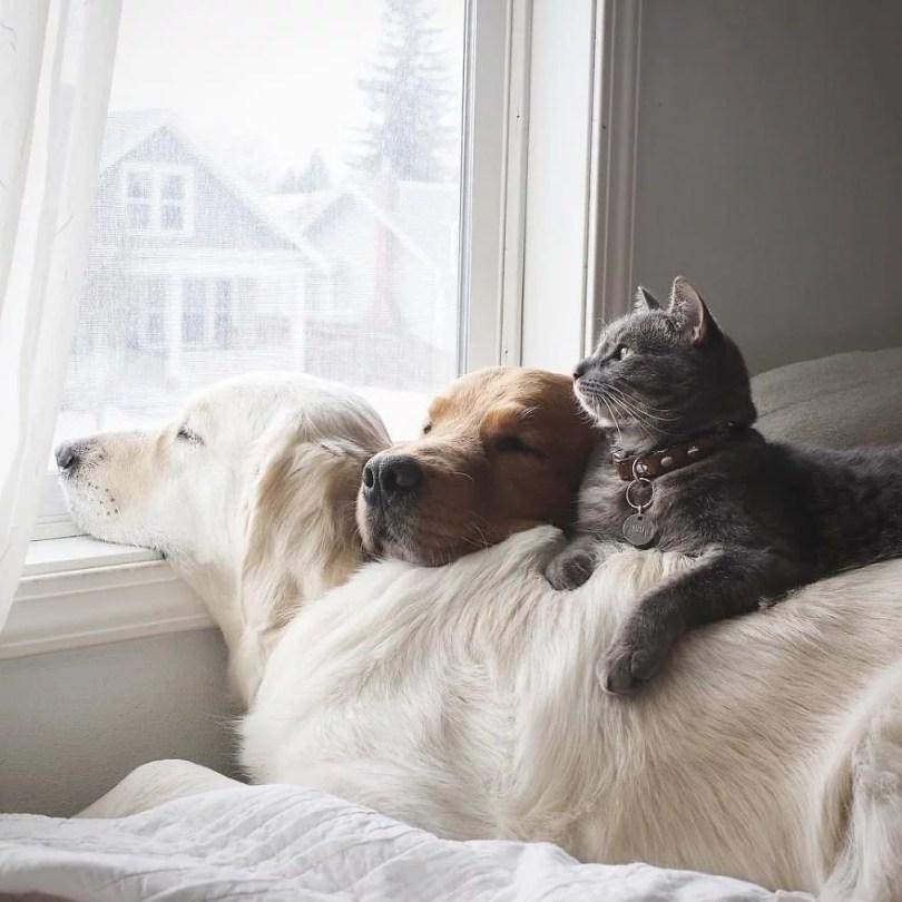 caes e gatos amigos2 - Book fotográfico de cães e gato melhores amigos