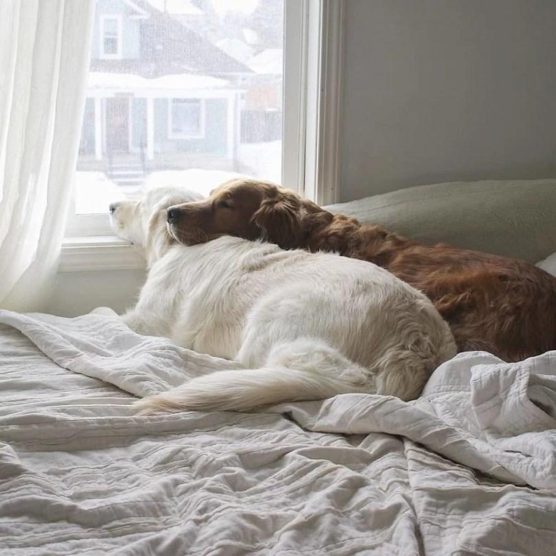 caes e gatos amigos30 - Book fotográfico de cães e gato melhores amigos