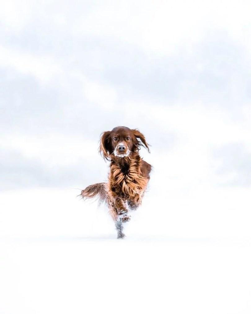 foto de cachorro 6 - Foto de cachorro: Dono faz book fotográfico de seu cão