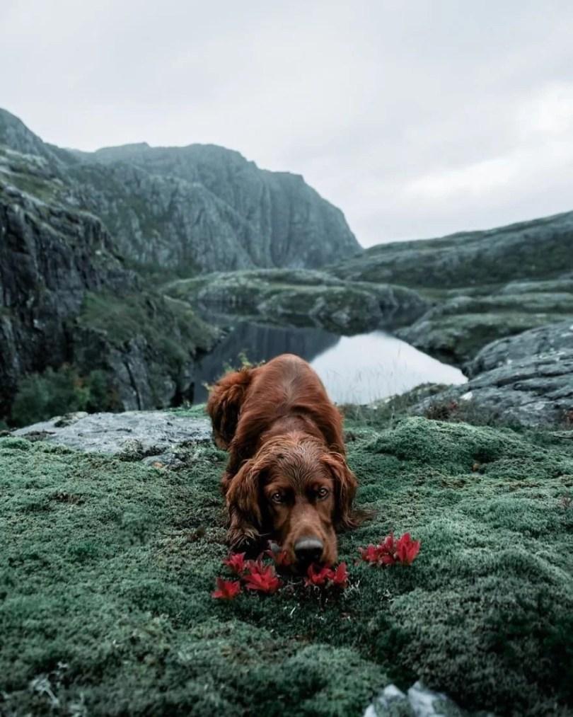foto de cachorro 7 - Foto de cachorro: Dono faz book fotográfico de seu cão