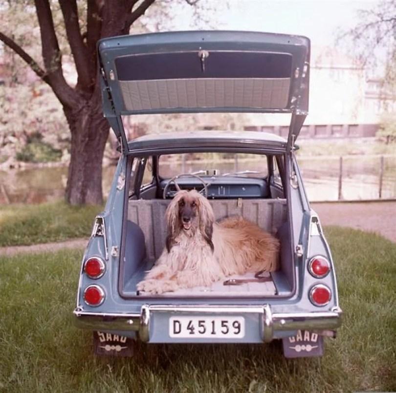 "vintage station wagon car 60s photography 23 5bb74bdd476eb  605 - Fotos Vintage que comprovam que os carros dos anos 60 eram ""Dá hora!"""