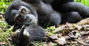 foto macaco engraçado - Melhores fotos de tiradas por Drones