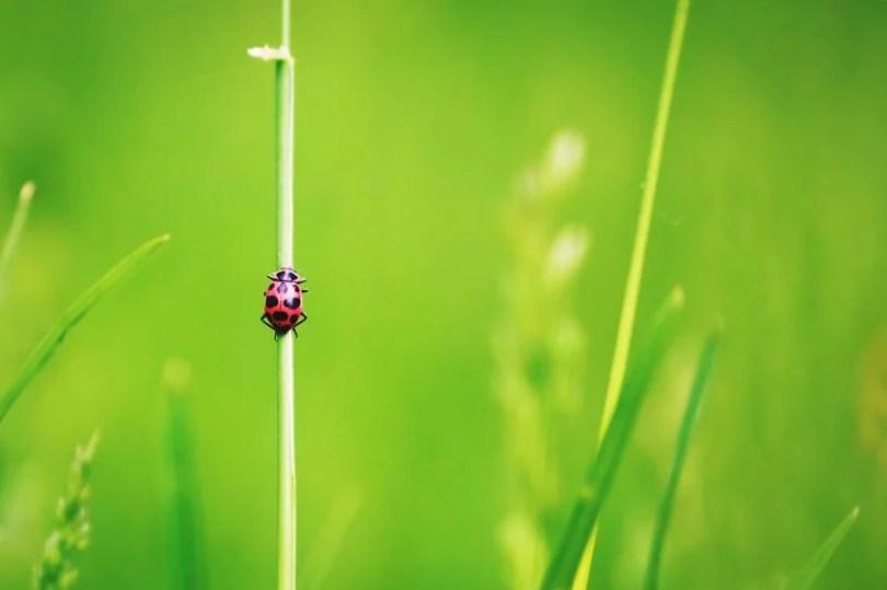 """1 Amanda Hazelwood Castleman AGORA images Ladybug in the grass USA 5d370dcbe7999  880 1 - 50 Fotos do Concurso Internacional 2019 no segmento """"Micro"""""""