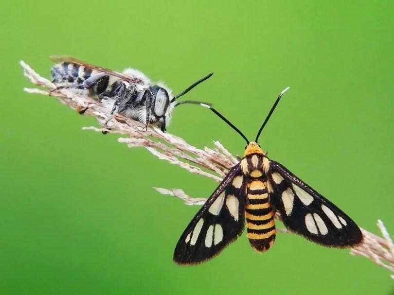 """Bobby Kuen AGORA images Bee and Butterfly Indonesia 5d370da4b842a  880 - 50 Fotos do Concurso Internacional 2019 no segmento """"Micro"""""""