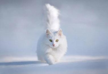 animais no inverno - 19 lindas fotografias de animais selvagens durante o inverno