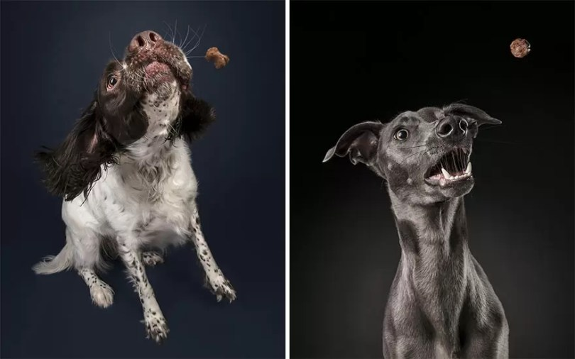 I took a series of photos that captured dogs and their relationship with food 5d9df776d1de3  880 - Fotógrafo de animais de estimação